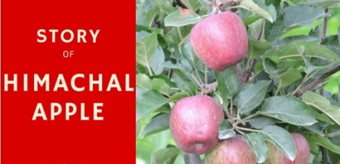 himachal-apple