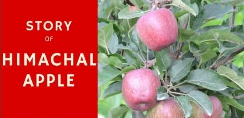 himachal-apple